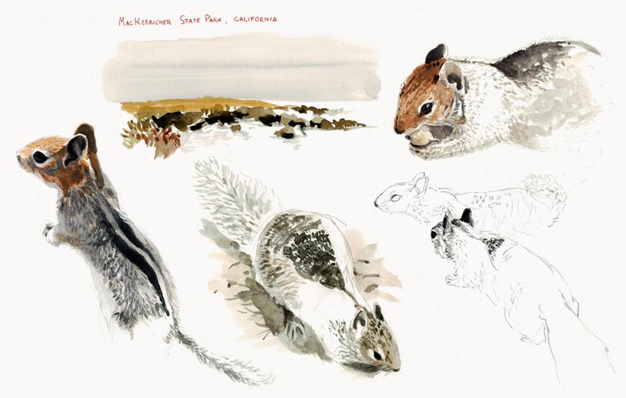 Écureuils terrestres de Californie