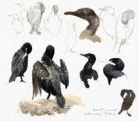19_cormorant-brandt.jpg