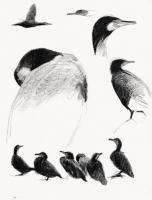 19_grand-cormoran.jpg