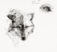20_canis-lupus.jpg
