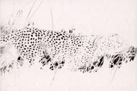 20_guepard.jpg